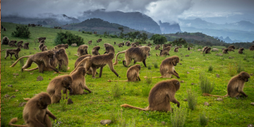 Ethiopia Earns $1.4 billion From Tourism in Six Months