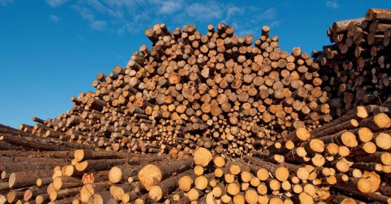 Abay Industrial Development SC to Set Up 3bln Birr Timber Processing Plants