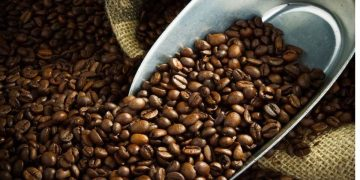 Nation Set to Build 50 Million USD Coffee Park
