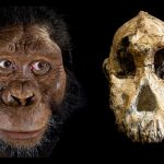Skull Of 3.8 Million-Year-Old Human Ancestor Discovered In Ethiopia