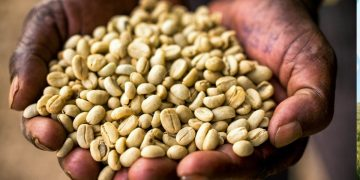 Nations Coffee Export Volume, Revenue Down