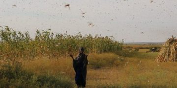 Desert Locust May Spread to More E. African Nations, UN Agency Says