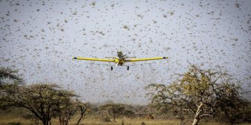 Bill & Melinda Gates Foundation Commits $10M to fight Locust upsurge in East Africa